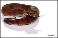 2011-07-30 Snakes shoot 141