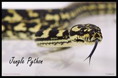 2011-07-30 Snakes shoot 156_print