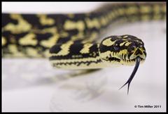 2011-07-30 Snakes shoot 156