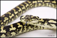 2011-07-30 Snakes shoot 160