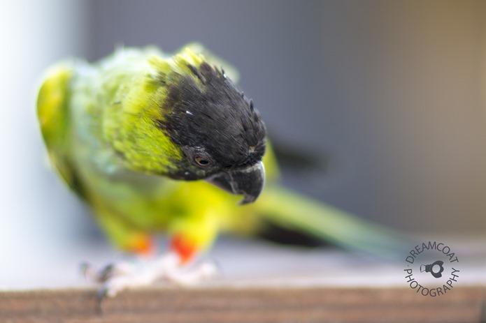 2014-02-27 Parrots 001