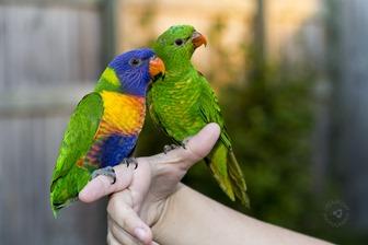 2014-02-27 Parrots 061