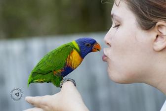 2014-02-27 Parrots 084