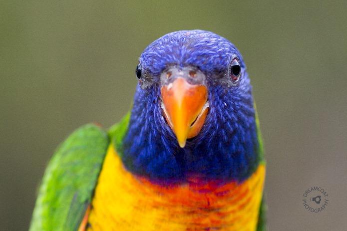 2014-02-27 Parrots 089v2
