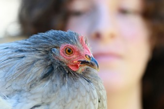 2015-05-09 Chickens 005