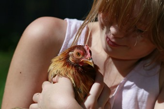 2015-05-09 Chickens 064